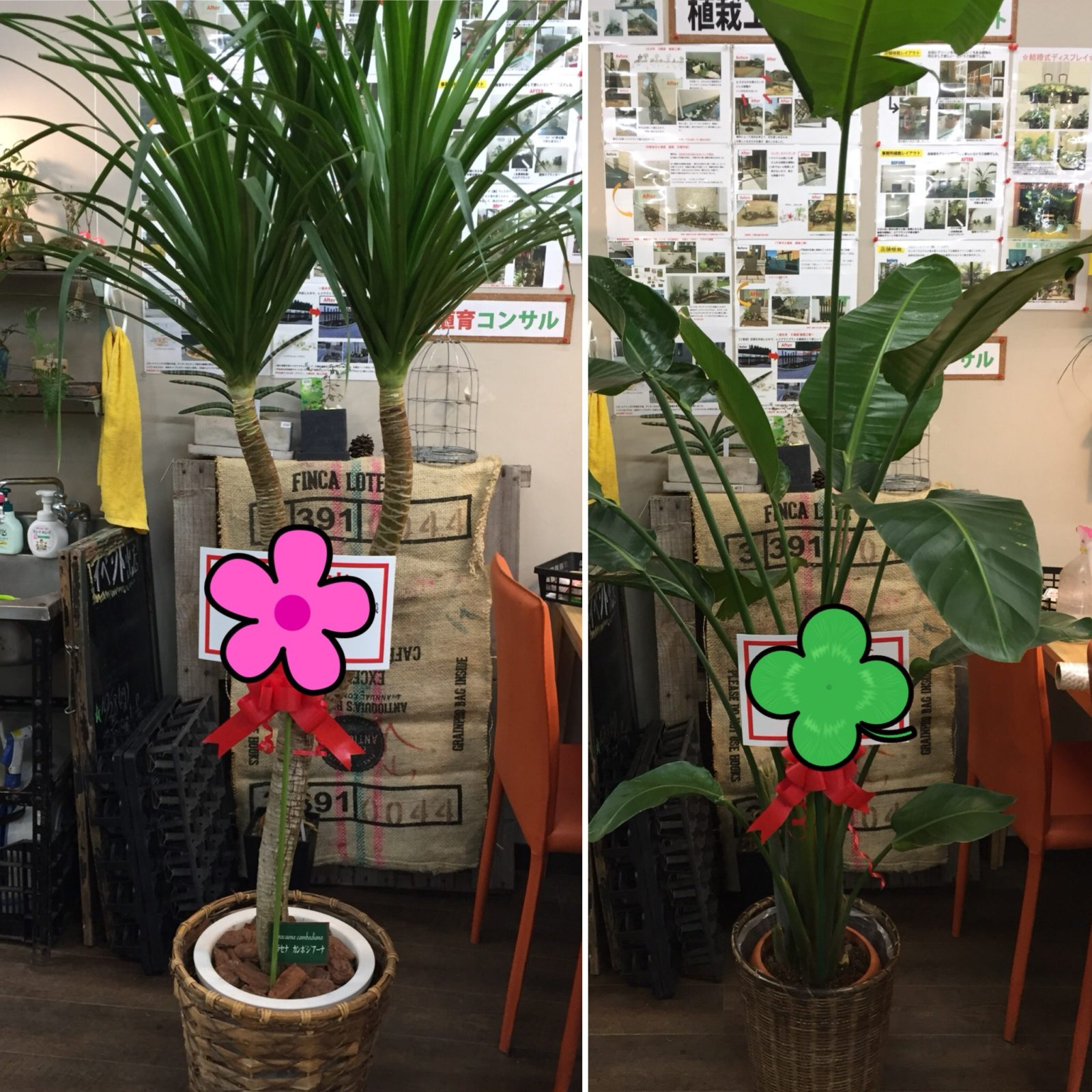観葉植物ギフト