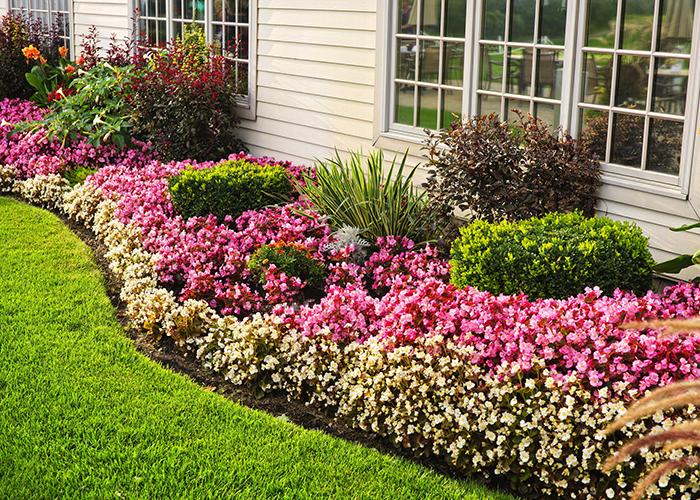 庭,花壇,造園,お花