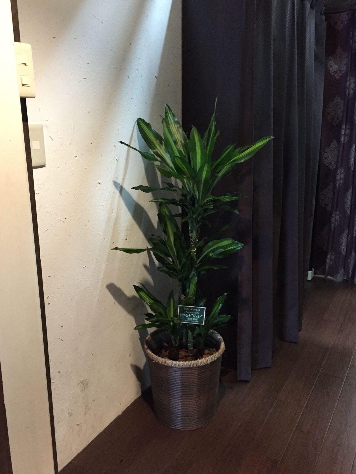 暗さと水切れに強い植物